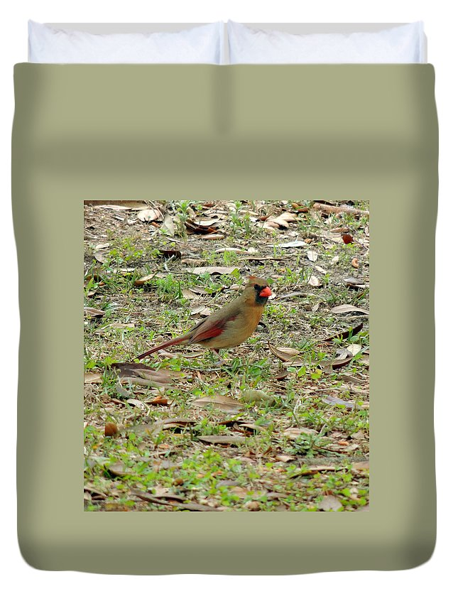 Digital Photography Duvet Cover featuring the photograph Female Cardinal by Kim Pate