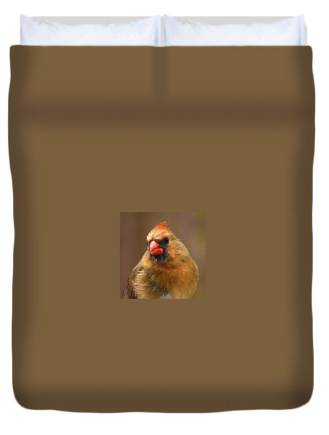 Cardinal Duvet Cover featuring the photograph Female Cardinal by Sandi OReilly