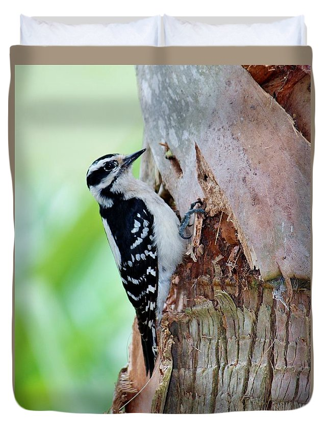 Dryobates Pubescens Duvet Cover featuring the photograph Female Downy Woodpecker by Cynthia Guinn
