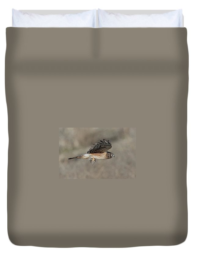 Bird Duvet Cover featuring the photograph Female Harrier Scoed Field Catch by Leslie Reagan - Joy To The Wild Photos