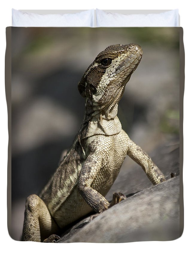 Heiko Duvet Cover featuring the photograph Female Jesus Lizard by Heiko Koehrer-Wagner