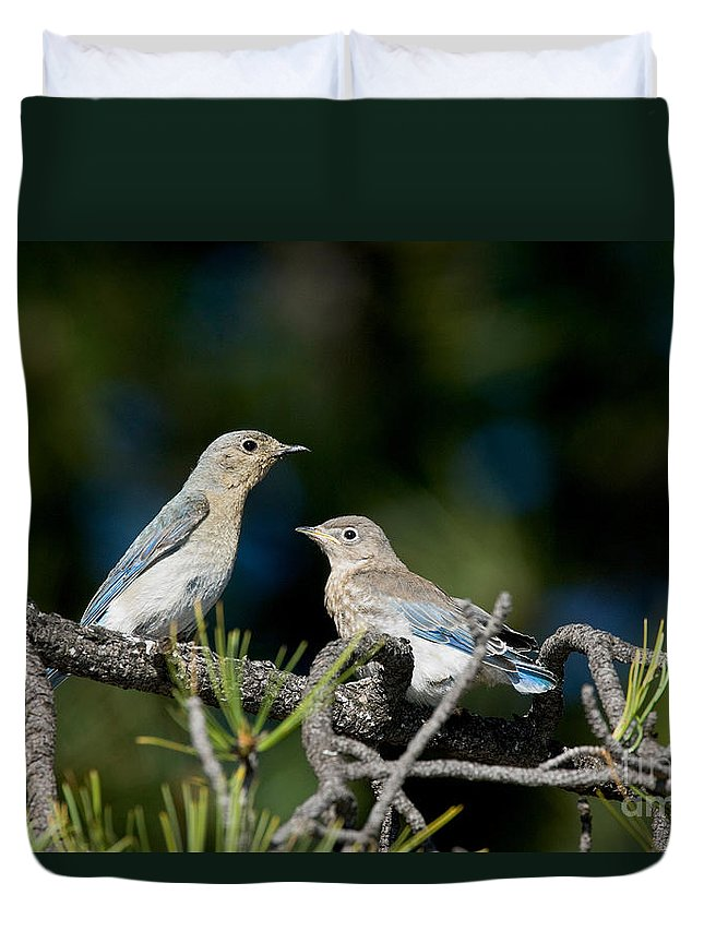 Animal Duvet Cover featuring the photograph Female Mountain Bluebird With Fledgling by Anthony Mercieca