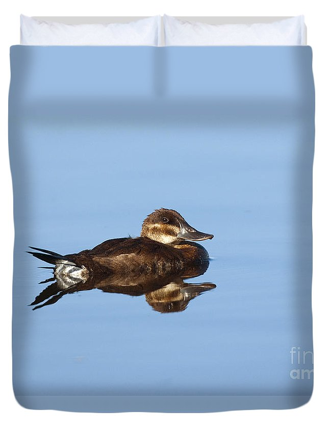 Fauna Duvet Cover featuring the photograph Female Ruddy Duck Oxyurus Jamaicensis by Anthony Mercieca