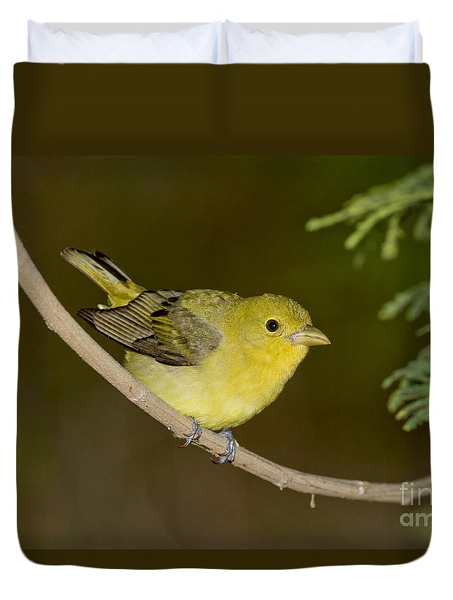 Scarlet Tanager Duvet Cover featuring the photograph Female Scarlet Tanager by Anthony Mercieca