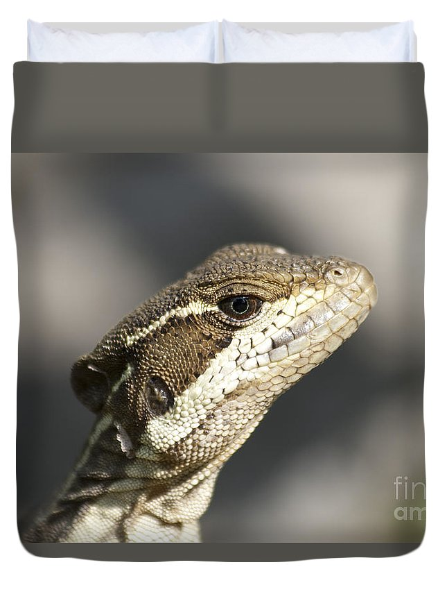 Heiko Duvet Cover featuring the photograph Female Striped Basilisk by Heiko Koehrer-Wagner