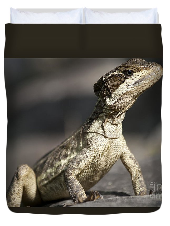 Heiko Duvet Cover featuring the photograph Female Striped Lizard by Heiko Koehrer-Wagner