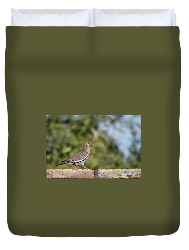 Morning Dove Duvet Cover featuring the photograph Fence Walker by Robert Bales