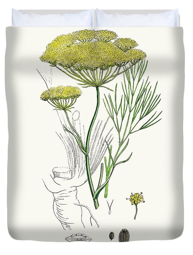 White Background Duvet Cover featuring the digital art Fennel Plant Scientific Illustration by Mashuk