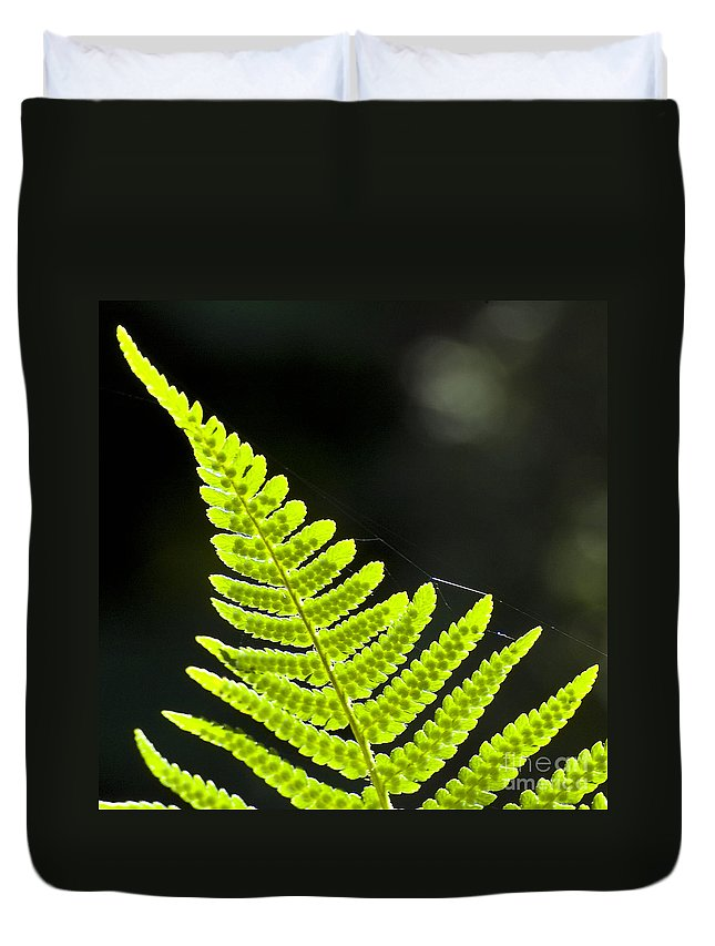 Heiko Duvet Cover featuring the photograph Fern Tip by Heiko Koehrer-Wagner