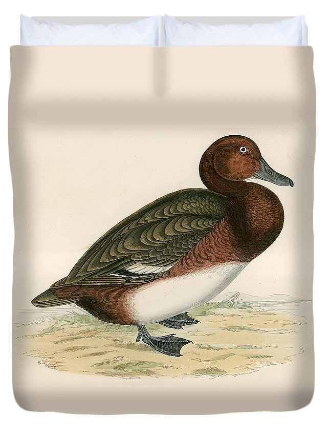 Birds Duvet Cover featuring the painting Ferruginous Duck by Beverley R Morris