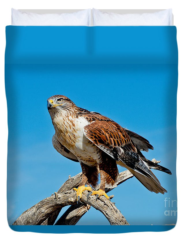 Bird Duvet Cover featuring the photograph Ferruginous Hawk About To Take by Anthony Mercieca