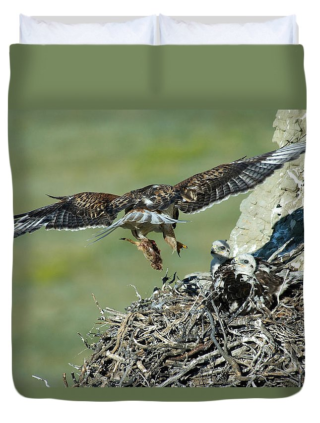 Animal Duvet Cover featuring the photograph Ferruginous Hawk Bringing Food To Young by Anthony Mercieca