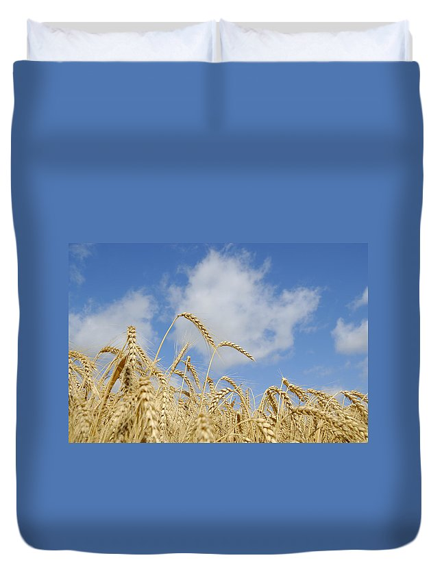 Wheat Duvet Cover featuring the photograph Field Of Wheat by Charles Beeler