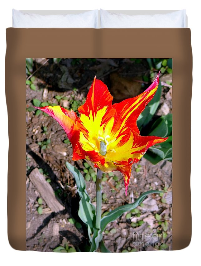 Nature Duvet Cover featuring the photograph Fiery Beauty by Ed Weidman