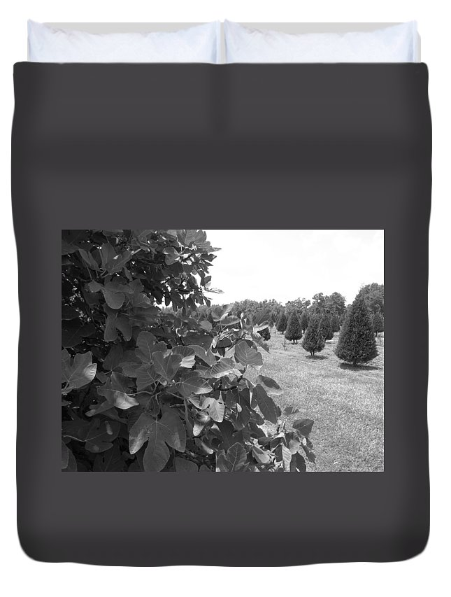 Fig Tree Duvet Cover featuring the photograph Fig Tree by Beth Vincent