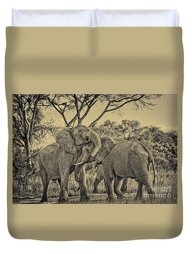 Trip Duvet Cover featuring the photograph fighting male African elephants by Juergen Ritterbach