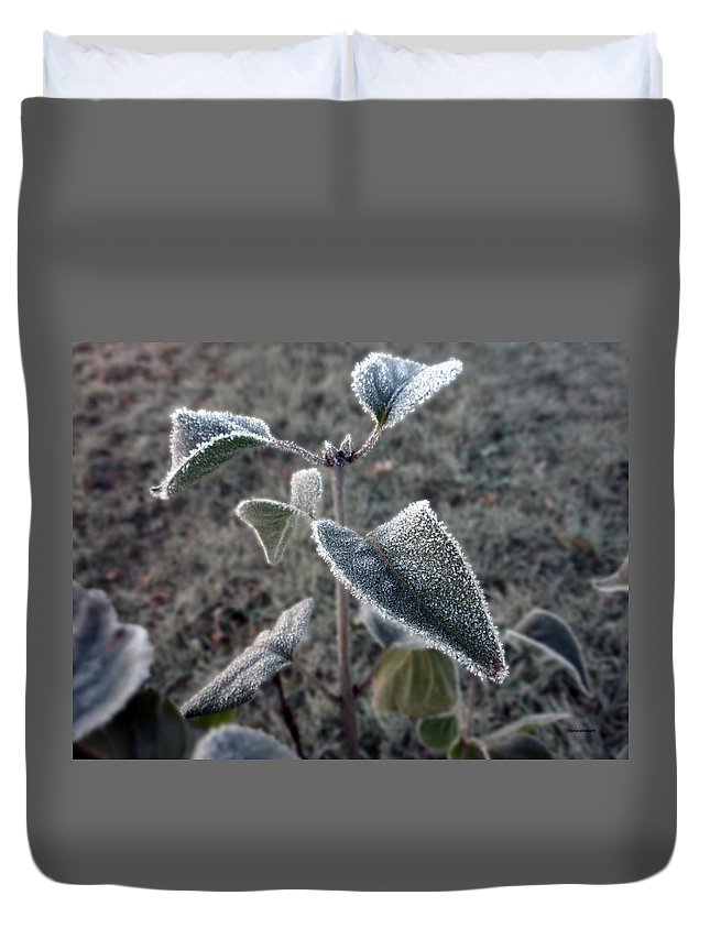 Tree Duvet Cover featuring the photograph First Frost by Thomas Woolworth