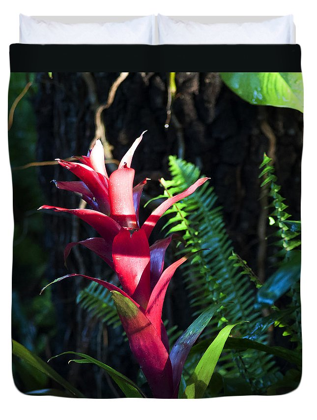 Bromeliad Duvet Cover featuring the photograph First Light by Norman Johnson