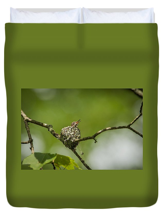 Archilochus Colubris Duvet Cover featuring the photograph First Look by Joye Ardyn Durham