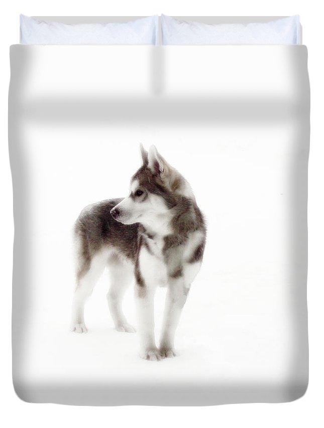 Wolf Photography Dave Pucciarelli Duvet Cover featuring the photograph First Winter by Iconic Images Art Gallery David Pucciarelli