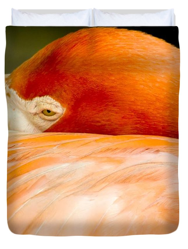 Flamingo Duvet Cover featuring the photograph Flamingo Napping by Sabrina L Ryan