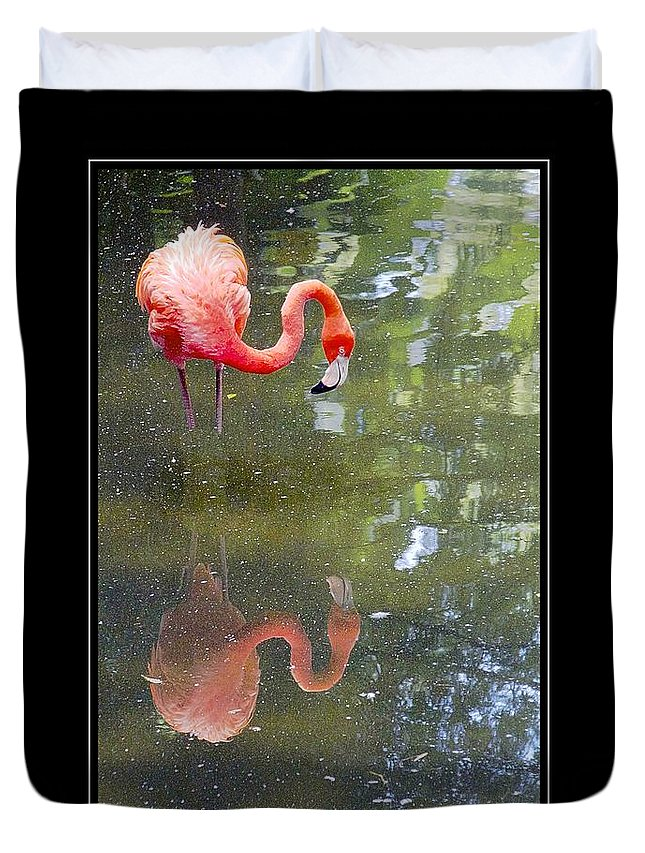 Flamingo Duvet Cover featuring the photograph Flamingo Reflected by Alice Gipson