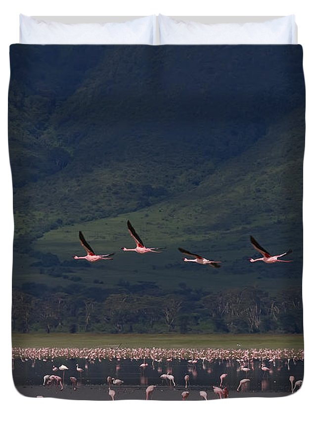 Phoeniconaias Minor Duvet Cover featuring the photograph Flamingos #6590 by J L Woody Wooden