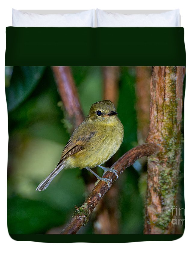Flavescent Flycatcher Duvet Cover featuring the photograph Flavescent Flycatcher by Anthony Mercieca