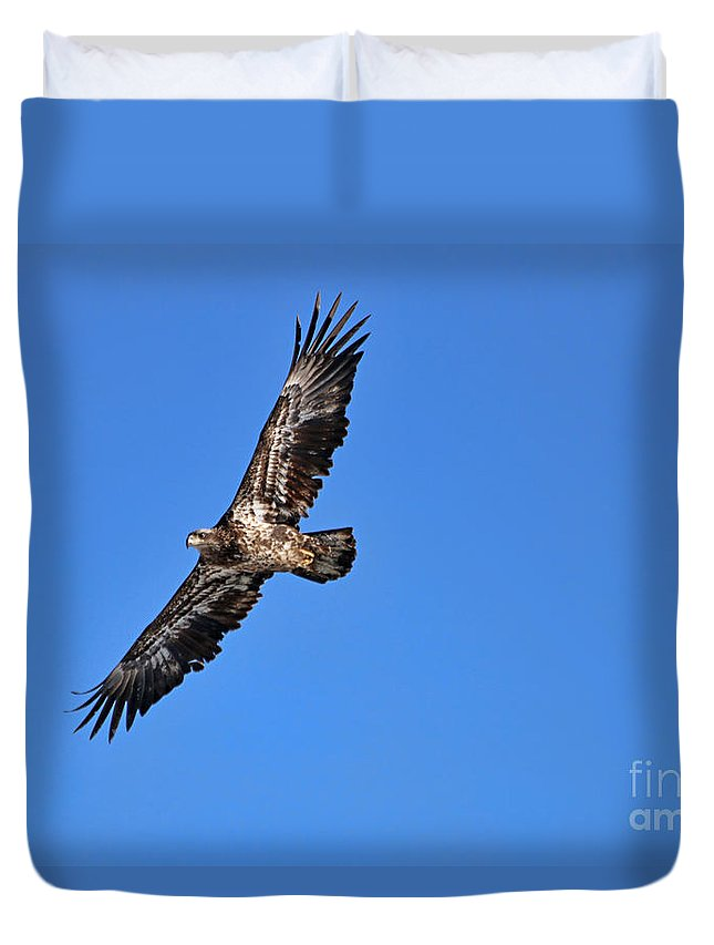 Fledgling Bald Eagle Duvet Cover featuring the photograph Fledgling Bald Eagle 5048 by Jack Schultz