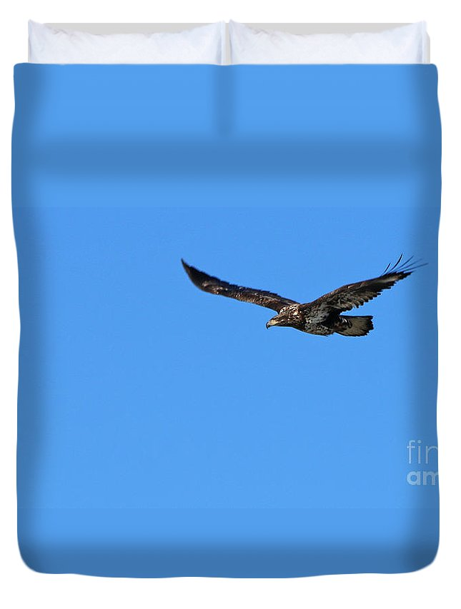 Fledgling Bald Eagle Duvet Cover featuring the photograph Fledgling Bald Eagle 5076 by Jack Schultz