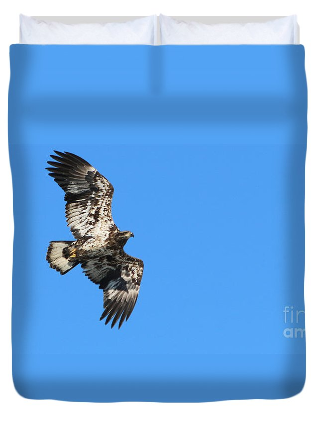 Fledgling Bald Eagle Duvet Cover featuring the photograph Fledgling Bald Eagle 5078 by Jack Schultz