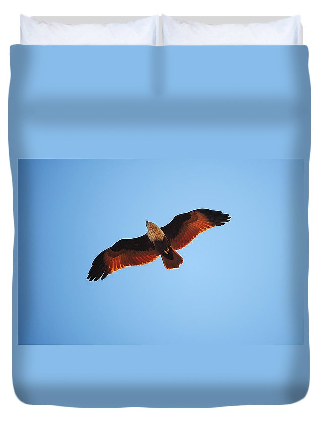 Bird Duvet Cover featuring the photograph Flight Of Eagle by Jenny Rainbow