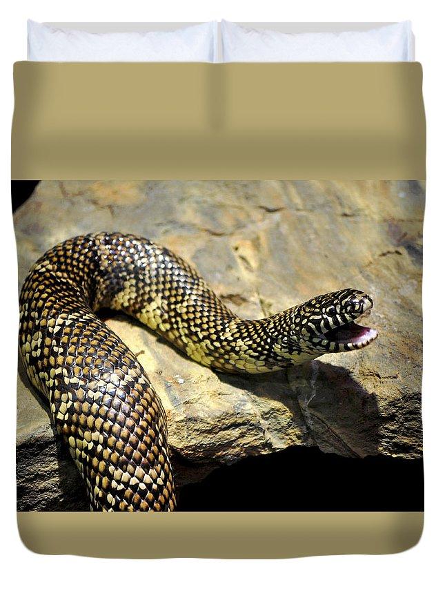 Horizontal Duvet Cover featuring the photograph Florida King Snake Lampropeltis Getula Floridana Usa by Sally Rockefeller