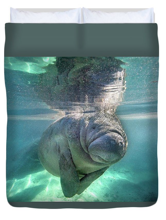Underwater Duvet Cover featuring the photograph Florida Manatee by Ai Angel Gentel