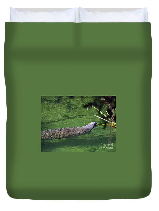 America Duvet Cover featuring the photograph Florida Manatee by Howard Stapleton