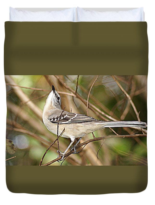 Mockingbird Duvet Cover featuring the photograph Florida Mockingbird by Paul Wilford