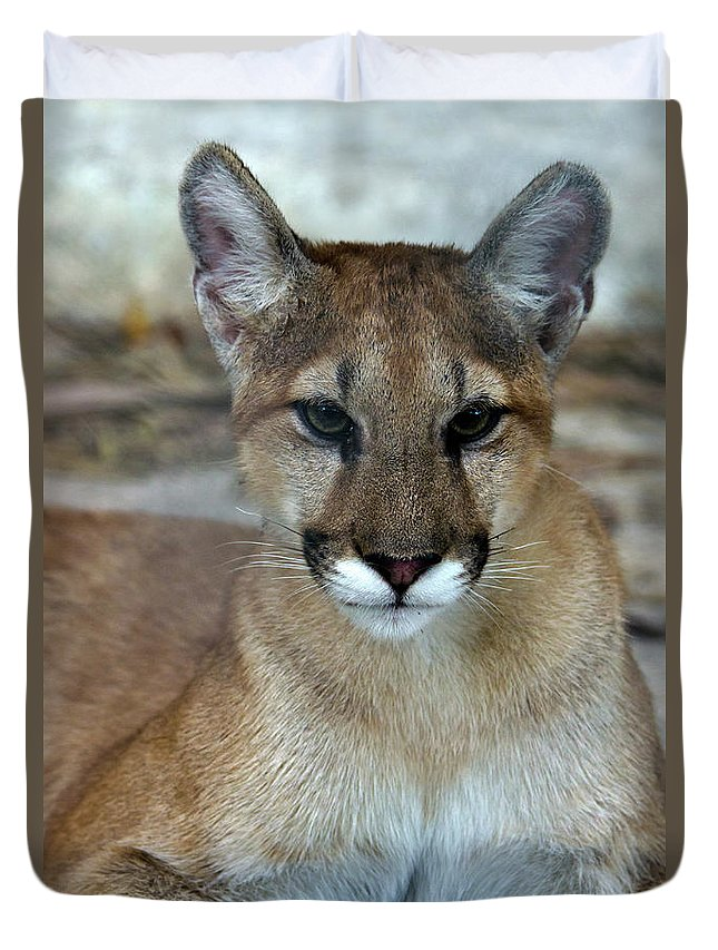 Animal Themes Duvet Cover featuring the photograph Florida Panther, Endangered by Mark Newman