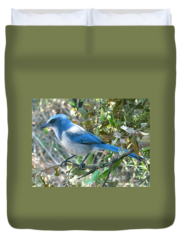 Nature Duvet Cover featuring the photograph Florida Scrub Jay by Peg Urban