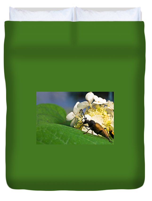 Beetle Duvet Cover featuring the photograph Flower Rise Over Beetle by Douglas Barnett