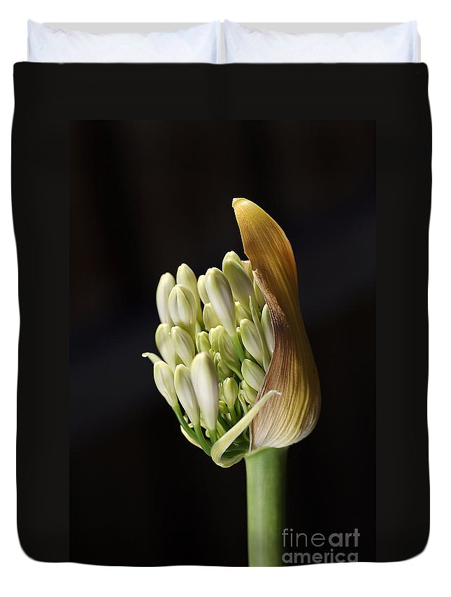Agapanthus Duvet Cover featuring the photograph Flower-white-agapanthus-bud by Joy Watson