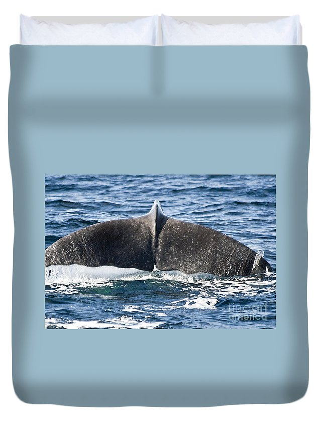 Whale Duvet Cover featuring the photograph Flukes Of A Sperm Whale by Heiko Koehrer-Wagner