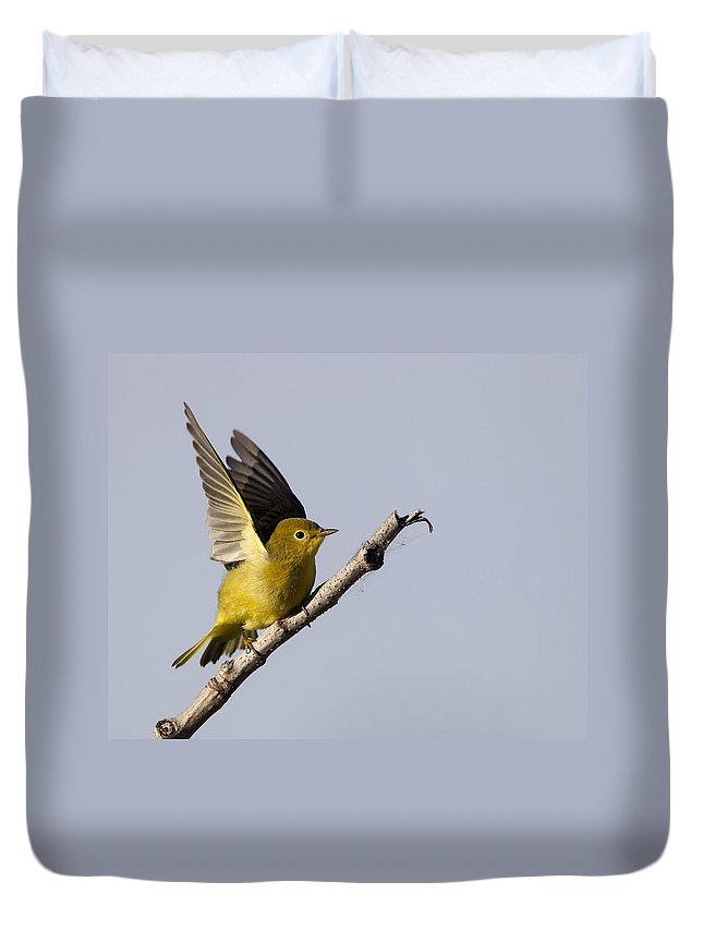 Doug Lloyd Duvet Cover featuring the photograph Fly Away by Doug Lloyd