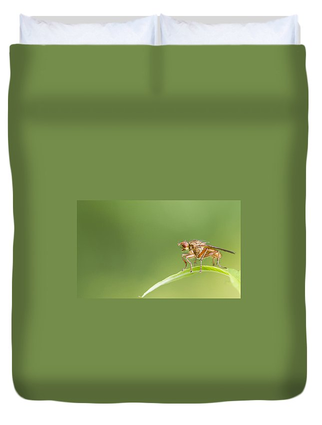 Fly Duvet Cover featuring the photograph Fly by Chris Smith