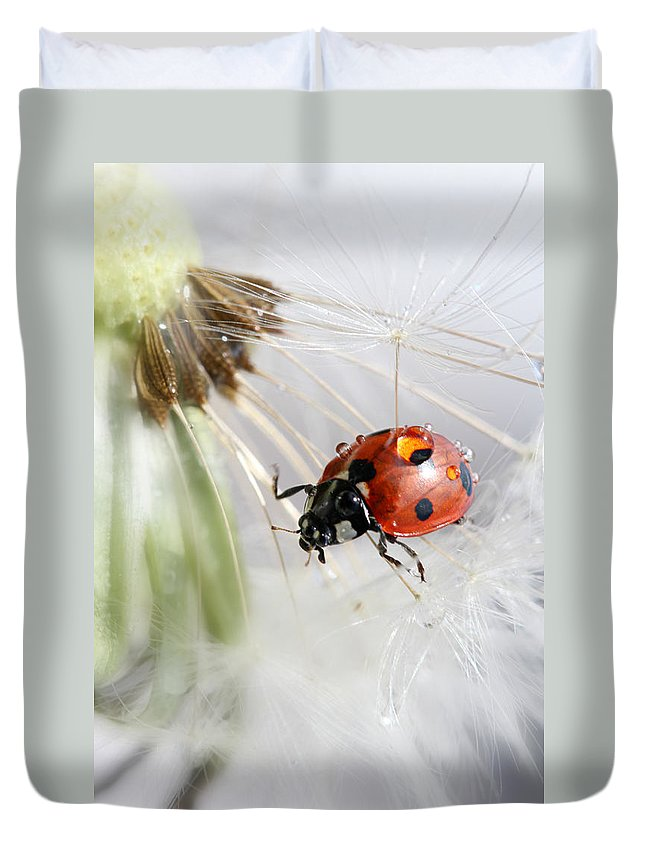 Drops Duvet Cover featuring the photograph Fly Ladybug. Fly by Heike Hultsch