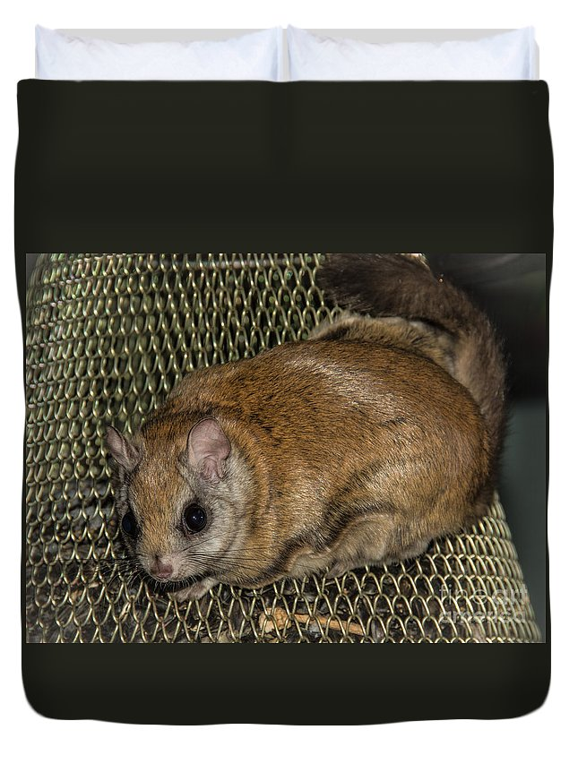 Duvet Cover featuring the photograph Flying Squirrel On The Feeder by Cheryl Baxter