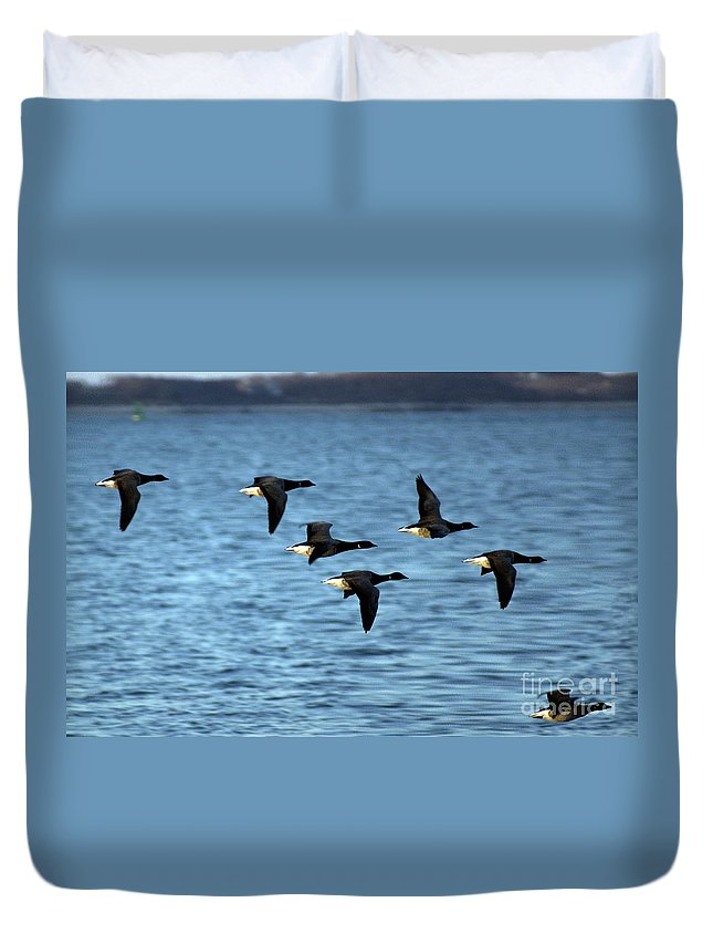 Bird Duvet Cover featuring the photograph Flyway by Joe Geraci