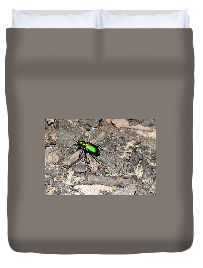 Insect Duvet Cover featuring the photograph Forest Floor Walker 7259 by Bonfire Photography