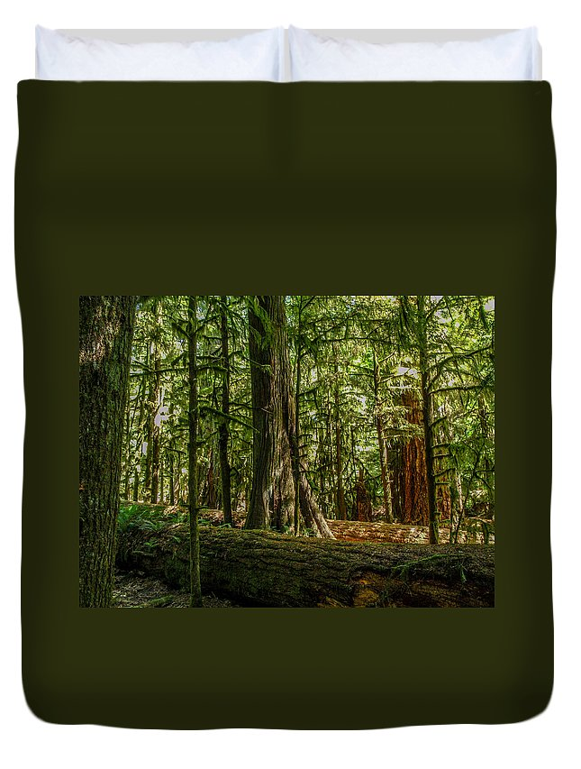 Old Growth Forest Duvet Cover featuring the photograph Forest Of Cathedral Grove Collection 1 by Roxy Hurtubise