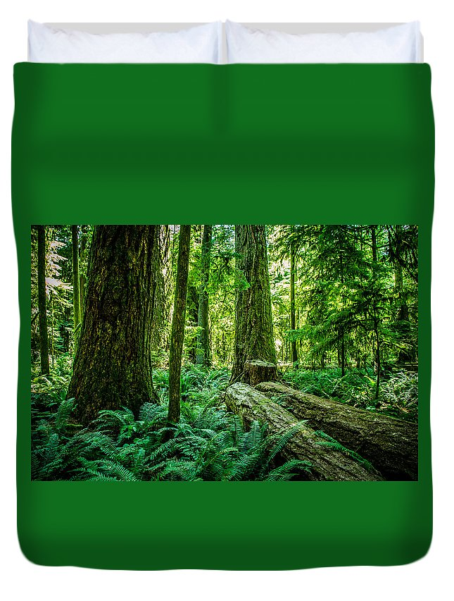 Old Growth Forest Duvet Cover featuring the photograph Forest Of Cathedral Grove Collection 8 by Roxy Hurtubise