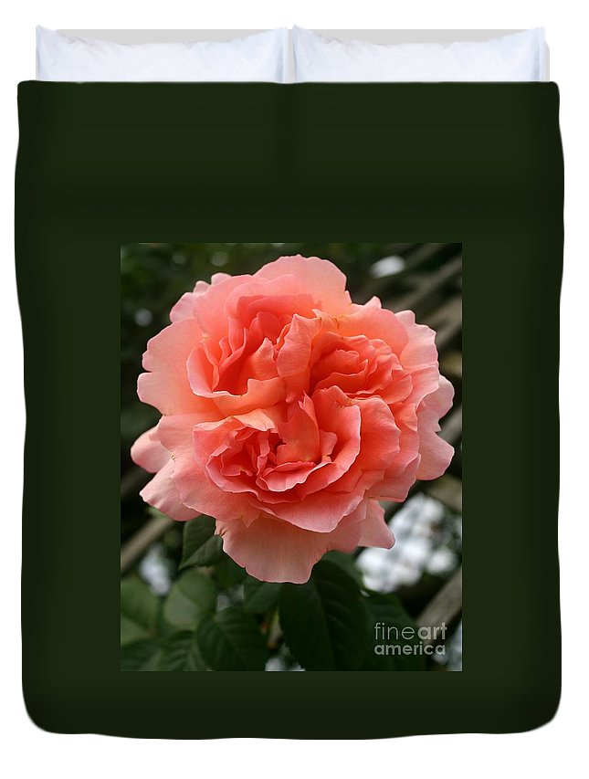 Rose Duvet Cover featuring the photograph Formidable Bloom by Christiane Schulze Art And Photography